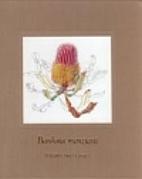 Banksia menziesii by Philippa Nikulinsky