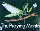 The Praying Mantis (Real or Make-Believe?)…