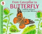 From Caterpillar to Butterfly…