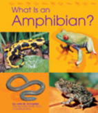What Is an Amphibian? (Animal Kingdom) by…