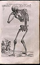 Vesalius at 500: an exhibition commemorating…