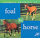 Foal to Horse (Discovery Library: Animals…