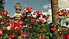 Die Gärten Siziliens [DVD] (45 min) by Eva…