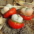 Mini Turk's Turban Squash by Unknown