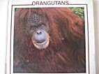Orangutans (Monkey Discovery Library) by…
