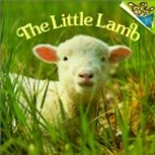 The Little Lamb by Judy Dunn