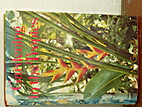 Gardening In the Tropics by T M Greensill