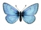 That Butterfly in Nabokov's Eye: Oral…