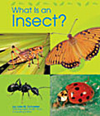 What Is an Insect? (Animal Kingdom) by Lola…