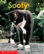 Sooty by Shelley Jones
