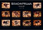 Brachypelma by Marcus Uth