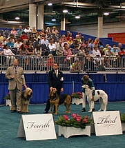 Author photo. Hound Group, AKC World Series of Dog Shows, Reliant Stadium, Houston, Texas, 2006. Photo by Ed Schipul / Wikimedia Commons.