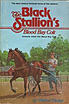 The Black Stallion's Blood Bay Colt…
