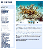 Coralpedia V 1.0 : A guide to Caribbean…