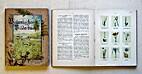 Botanisches Bilderbuch für Jung und…