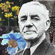 Foto do autor. PlantExplorers.com