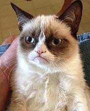 Författarporträtt. grumpy cat
