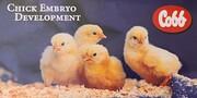 Chicken Embryo Development de Cobb