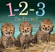 1-2-3 ZooBorns! af Andrew Bleiman