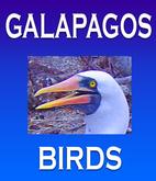 Galapagos Islands Birds in Herman…