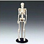 Tiny Tim My First Skeleton by Anatomy…