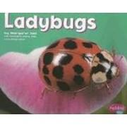 Ladybugs [Scholastic] (Bugs, Bugs, Bugs!)…