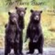 The Three Bears With REAL Photographs de…